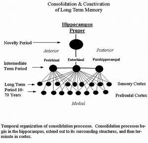 Psychotherapy & Neuroscience » Consolidation Deficits ...