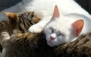 sleeping cat quotes about sleeping cats quotesgram