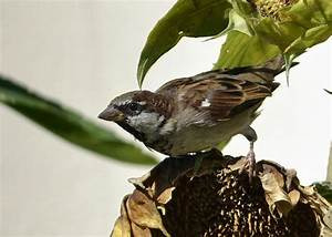 Graines De Tournesol Pour Oiseaux : quels animaux mangent des graines ~ Dailycaller-alerts.com Idées de Décoration