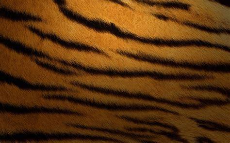 tiger print wallpaper gallery