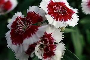 File:Flowers-Red-White ForestWander.JPG - Wikimedia Commons
