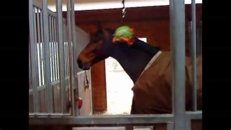 Pferd In Der Box Beschäftigen