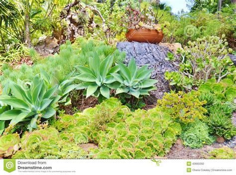 Garden Types : Colorful Succulent Garden And Ceramic Potted Plant Stock