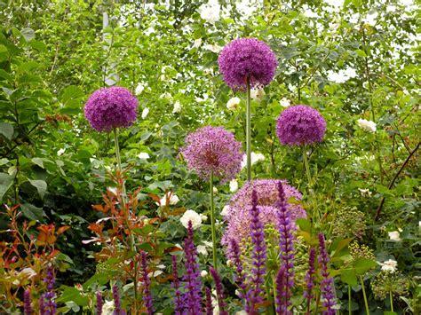 Garten Pflanzen by Pflanzen Garten Gestaltung Gartengestaltung Gartenbau