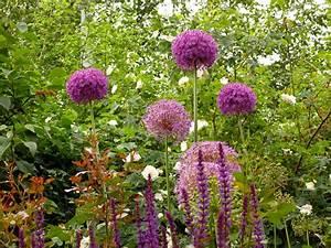 Pflanzen Pflegeleicht Garten : pflanzen garten gestaltung gartengestaltung gartenbau ~ Lizthompson.info Haus und Dekorationen