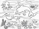 Coloring Ocean Pages Animal sketch template