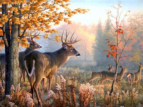 Reindeer Wallpaper Hd by Reindeer Wallpapers
