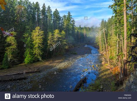 best forests in america top 28 beautiful forests in america 301 moved permanently america the beautiful redwood