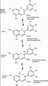 Effect Of Ph Conditions On Color Of Anthocyanins Or