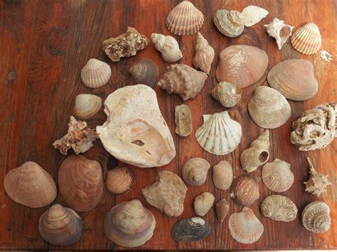 bureau de change carcassonne troc echange gros lot de coquillages et fossiles sur