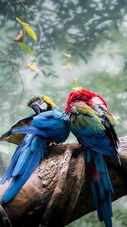 Iphone Bird Wallpapers Birds Preppy