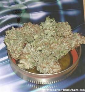 Lemon Skunk Review   Medical Marijuana Strains