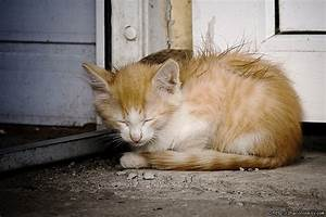 Pin Homeless Cats And Volunteers For A Cat Rescue ...