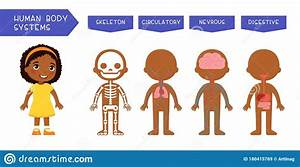Anatomy Of Children Muscular System  Exercise And Cartoon