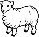 Sheep Coloring Pages Outline Preschool Learn Drawing Sky Printable Fur Draw Coloringsky Clipartmag Fun sketch template