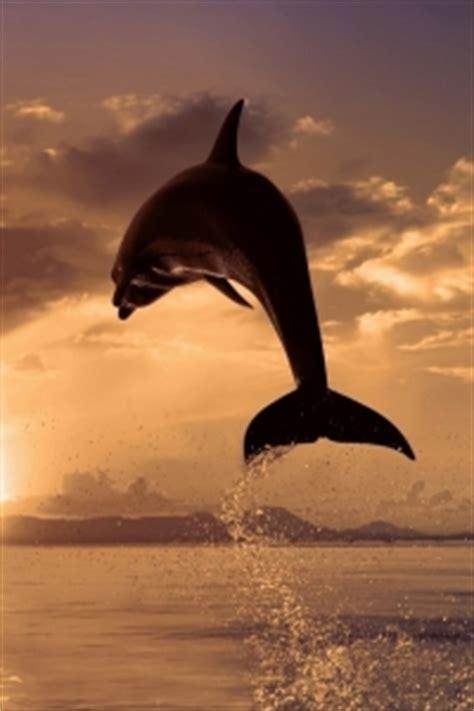 delfin sonnenaufgang handy logo kostenlos hintergrundbild