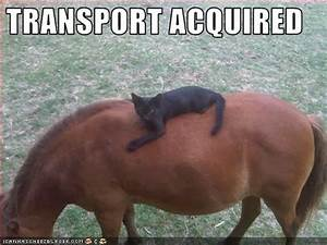 funny horse pictures cartoon with captions - very funny ...