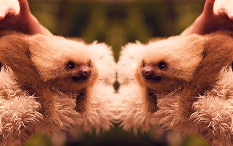sloth wallpaper wallpapersafari