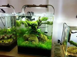 Liter Berechnen Aquarium : 30 liter nano aquarium aquascaping pinterest the o 39 jays betta and nano aquarium ~ Themetempest.com Abrechnung