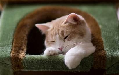 Cat Cats Wallpapers Definition 4k Desktop Wallpapersafari