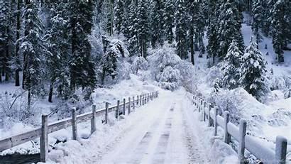 Winter Desktop Forest Backgrounds Wallpapers