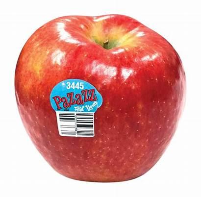 Pazazz Apples Honeycrisp