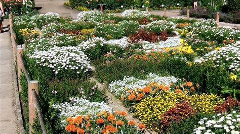 Welche Blumen Vertragen Viel Sonne by Pflanzen Volle Sonne Wenig Wasser Blumen Die Sonne