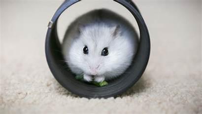 Hamster Vitakraft Hamstere Med Kaerlek