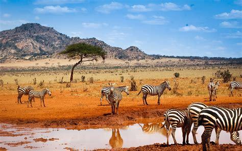 Safari Animals Wallpaper - kenya safari zebras water blue sky wallpaper animals