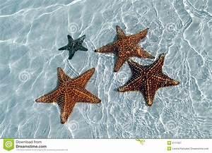 Etoile De Mer Dofus : toile de mer au bas de sable de la mer fine photographie stock libre de droits image 5111927 ~ Medecine-chirurgie-esthetiques.com Avis de Voitures