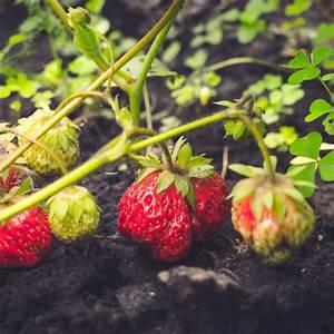 Quoi Planter En Automne : aromates arbustes quoi planter en ao t ooreka ~ Melissatoandfro.com Idées de Décoration