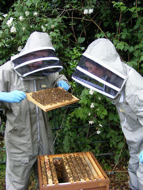 beekeeping   kindling trust