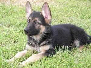 german shepherd puppies for sale bridgend bridgend With german shepherd dog house for sale