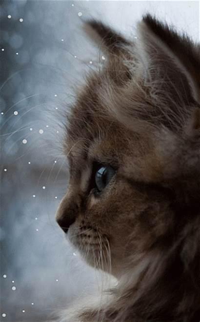 Cat Gifs Cats Snow Background Kittens Desktop