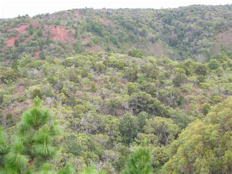 Tropical Dry Forests Of The Pacific Hawaii