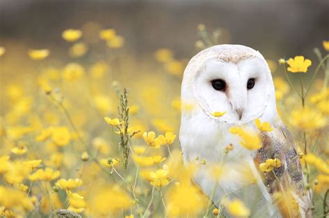picture flowers grass vertebrate owl animal