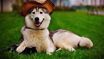 Funny 1080p Animal Wallpapers Dog Animals Desktop