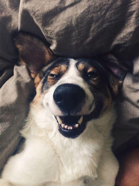fotos de perros  felices perros amigos