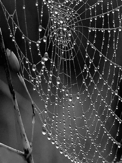 en vrac une toile d araign 233 e