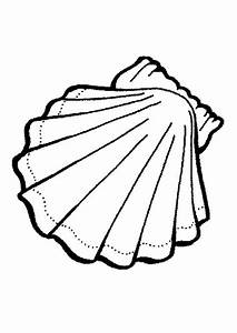Seashell Coloring Pages Seashell Exquisite Calico