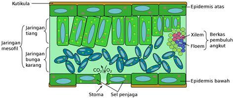 bagian bagian daun tumbuhan struktur luar