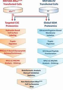 Oncotarget | Comparative proteomics of a model MCF10A-KRas ...