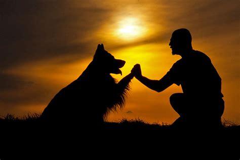 Sei meines Hundes Freund Foto & Bild  tiere, haustiere
