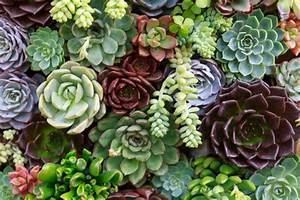 5 Mistakes Youre Making With Your Succulents Growing