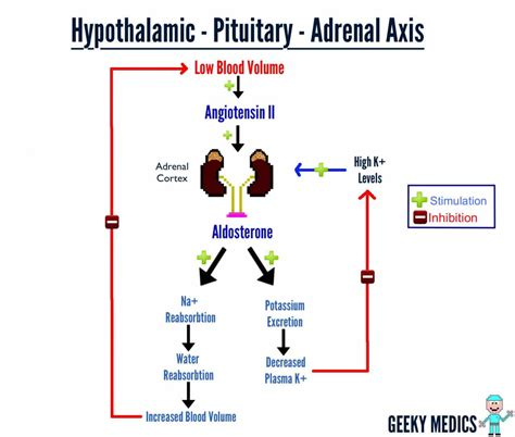m駘asse cuisine adh and aldosterone feedback loop