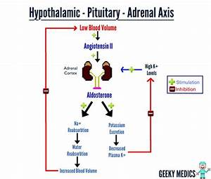 How The Adrenal Axis Works