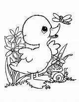 Duck Coloring Preschool Worksheets Crafts Kindergarten Toddler Comment sketch template