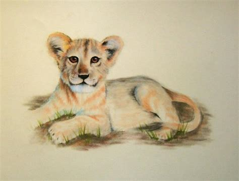lion cub animals drawings pictures drawings ideas