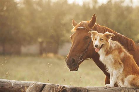 horses dog pet behave around train training gazette care health lovers