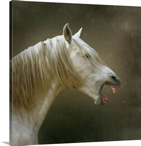 white horse  open mouth digitally enhanced background
